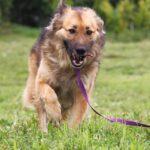 Гаврюша собака из приюта на пристройство, частный приют для бездомных животных Зов Предков zovpredkov.net фото 1