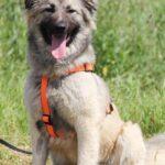 Джуди собака из приюта на пристройство, частный приют для бездомных животных Зов Предков zovpredkov.net фото 8