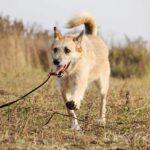 Рина собака из приюта на пристройство, частный приют для бездомных животных Зов Предков zovpredkov.net фото 2