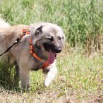 Джуди собака из приюта на пристройство, частный приют для бездомных животных Зов Предков zovpredkov.net фото 2