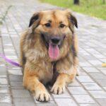 Гаврюша собака из приюта на пристройство, частный приют для бездомных животных Зов Предков zovpredkov.net фото 7