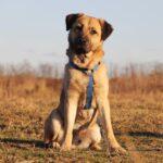 Байкал собака из приюта на пристройство, частный приют для бездомных животных Зов Предков zovpredkov.net фото 5