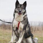 Тайна собака из приюта на пристройство, частный приют для бездомных животных Зов Предков zovpredkov.net фото 6