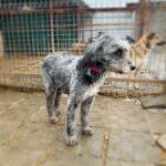 Тофифи собака из приюта на пристройство, частный приют для бездомных животных Зов Предков zovpredkov.net фото 2