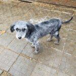 Тофифи собака из приюта на пристройство, частный приют для бездомных животных Зов Предков zovpredkov.net фото 1