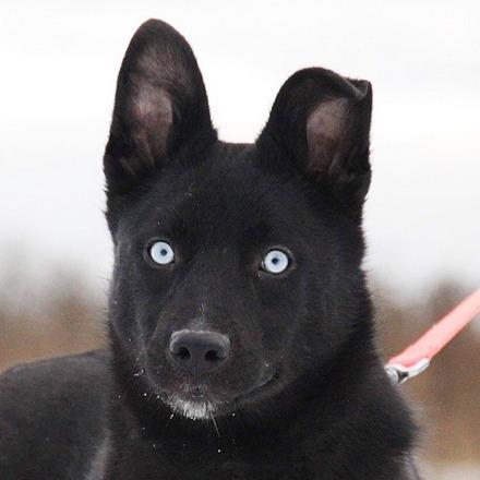 Бри собака из приюта на пристройство, частный приют для бездомных животных Зов Предков zovpredkov.net
