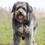 Тофифи собака из приюта на пристройство, частный приют для бездомных животных Зов Предков zovpredkov.net фото 13