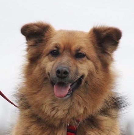 Миледи собака из приюта на пристройство, частный приют для бездомных животных Зов Предков zovpredkov.net