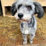 Тофифи собака из приюта на пристройство, частный приют для бездомных животных Зов Предков zovpredkov.net фото 3