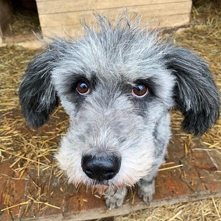 Тофифи собака из приюта на пристройство частный приют для бездомных животных Зов Предков zovpredkov.net