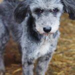 Тофифи собака из приюта на пристройство, частный приют для бездомных животных Зов Предков zovpredkov.net фото 4
