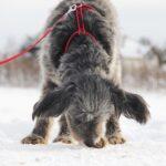 Тофифи собака из приюта на пристройство, частный приют для бездомных животных Зов Предков zovpredkov.net фото 5