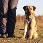Байкал собака из приюта на пристройство, частный приют для бездомных животных Зов Предков zovpredkov.net фото 1