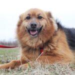 Миледи собака из приюта на пристройство, частный приют для бездомных животных Зов Предков zovpredkov.net фото 8