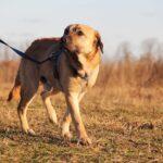 Байкал собака из приюта на пристройство, частный приют для бездомных животных Зов Предков zovpredkov.net фото 3