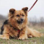 Миледи собака из приюта на пристройство, частный приют для бездомных животных Зов Предков zovpredkov.net фото 7