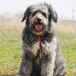Тофифи собака из приюта на пристройство, частный приют для бездомных животных Зов Предков zovpredkov.net фото 14
