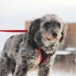 Тофифи собака из приюта на пристройство, частный приют для бездомных животных Зов Предков zovpredkov.net фото 10