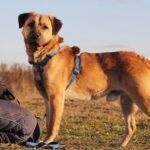 Байкал собака из приюта на пристройство, частный приют для бездомных животных Зов Предков zovpredkov.net фото 8
