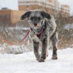 Тофифи собака из приюта на пристройство, частный приют для бездомных животных Зов Предков zovpredkov.net фото 8