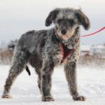Тофифи собака из приюта на пристройство, частный приют для бездомных животных Зов Предков zovpredkov.net фото 6