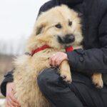 Ива собака из приюта на пристройство, частный приют для бездомных животных Зов Предков zovpredkov.net фото 1