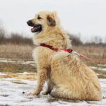 Ива собака из приюта на пристройство, частный приют для бездомных животных Зов Предков zovpredkov.net фото 4