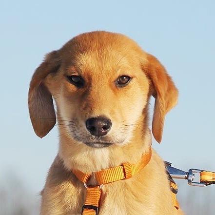 Арабика щенок из приюта на пристройство