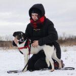 Квини собака из приюта на пристройство, частный приют для бездомных животных Зов Предков zovpredkov.net фото 1