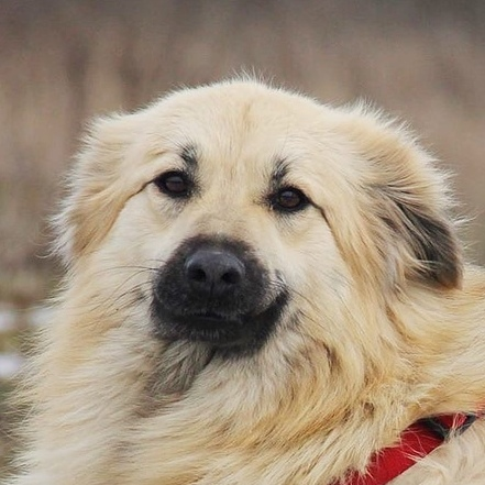 Ива собака из приюта на пристройство частный приют для бездомных животных Зов Предков zovpredkov.net