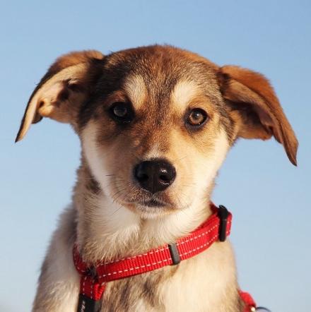 Моккиато щенок из приюта на пристройство