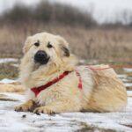 Ива собака из приюта на пристройство, частный приют для бездомных животных Зов Предков zovpredkov.net фото 2