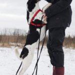 Квини собака из приюта на пристройство, частный приют для бездомных животных Зов Предков zovpredkov.net фото 2