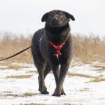 Черри собака из приюта на пристройство, частный приют для бездомных животных Зов Предков zovpredkov.net фото 4