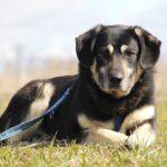 Бурбон собака из приюта на пристройство, частный приют для бездомных животных Зов Предков zovpredkov.net фото 7