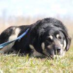 Бурбон собака из приюта на пристройство, частный приют для бездомных животных Зов Предков zovpredkov.net фото 2