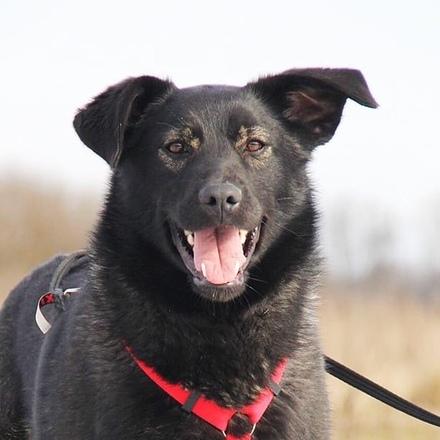 Черри собака из приюта на пристройство, частный приют для бездомных животных Зов Предков zovpredkov.net