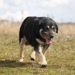 Бурбон собака из приюта на пристройство, частный приют для бездомных животных Зов Предков zovpredkov.net фото 3