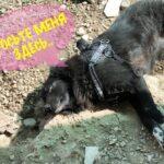 Лапка собака из приюта на пристройство, частный приют для бездомных животных Зов Предков zovpredkov.net фото 2