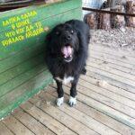 Лапка собака из приюта на пристройство, частный приют для бездомных животных Зов Предков zovpredkov.net фото 1