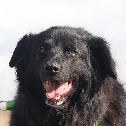 Лапка собака из приюта на пристройство, частный приют для бездомных животных Зов Предков zovpredkov.net