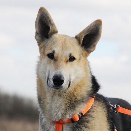 Лунтик собака из приюта на пристройство, частный приют для бездомных животных Зов Предков zovpredkov.net
