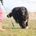 Лапка собака из приюта на пристройство, частный приют для бездомных животных Зов Предков zovpredkov.net фото 4