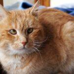Олли кот из приюта для бездомных животных Зов Предков на пристройство zovpredkov.net фото 2