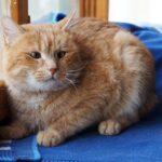 Олли кот из приюта для бездомных животных Зов Предков на пристройство zovpredkov.net фото 1