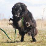 Лапка собака из приюта на пристройство, частный приют для бездомных животных Зов Предков zovpredkov.net фото 5