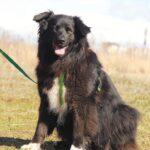 Лапка собака из приюта на пристройство, частный приют для бездомных животных Зов Предков zovpredkov.net фото 9