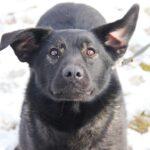 Черри собака из приюта на пристройство, частный приют для бездомных животных Зов Предков zovpredkov.net фото 8