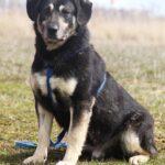 Бурбон собака из приюта на пристройство, частный приют для бездомных животных Зов Предков zovpredkov.net фото 6