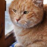 Олли кот из приюта для бездомных животных Зов Предков на пристройство zovpredkov.net фото 4